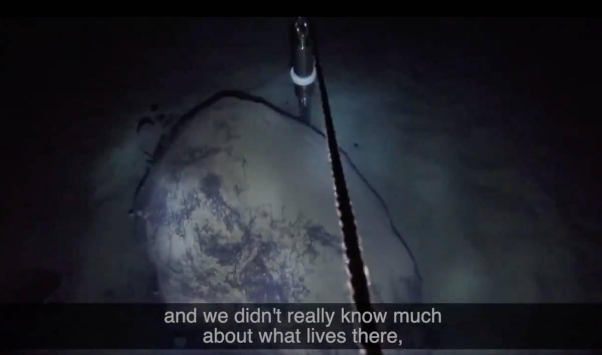 Screenshot of video of discovery of Antarctic sea life