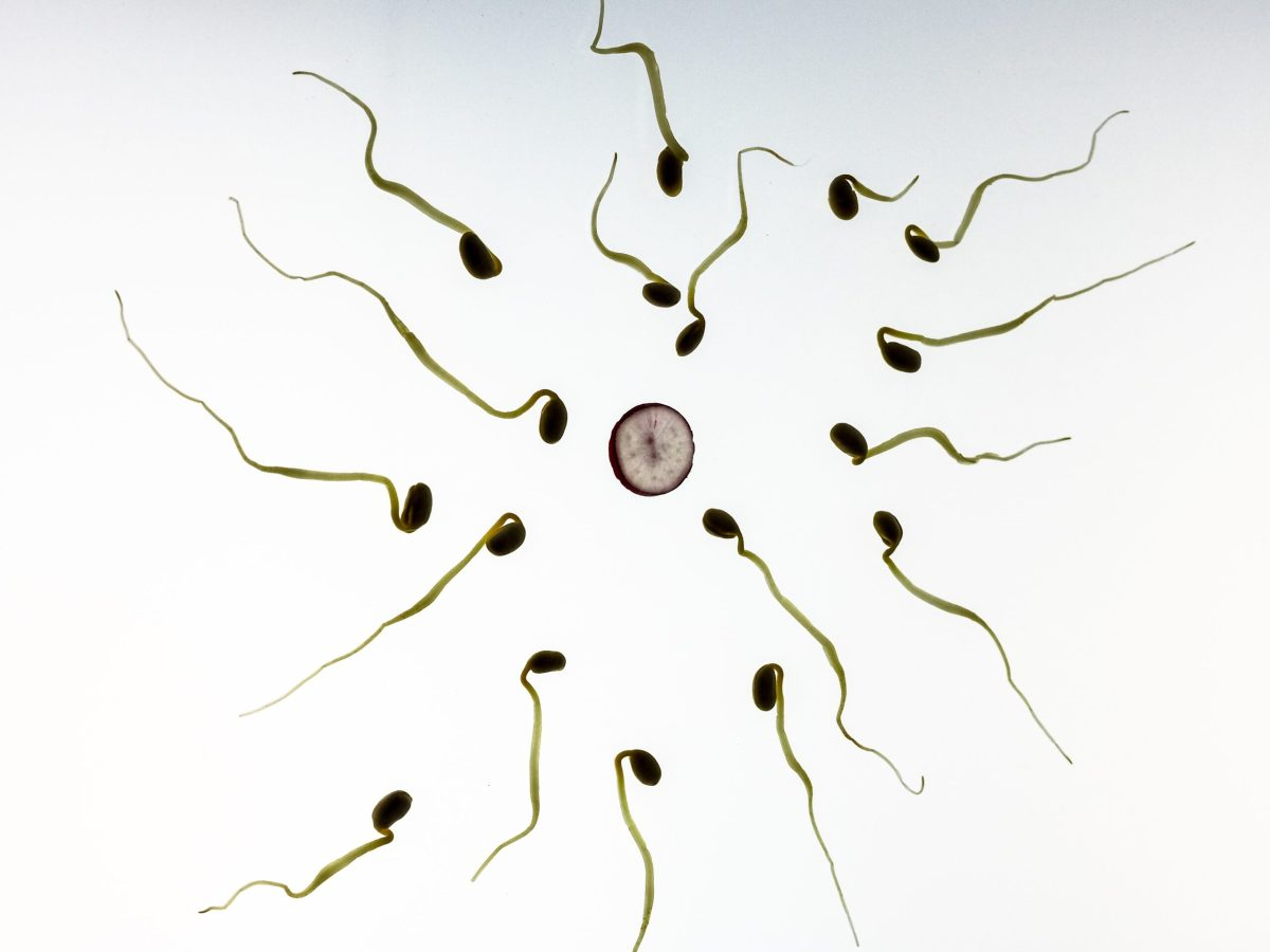 COVID-19 has upended the lives of Black Market Sperm Donors   Boing Boing