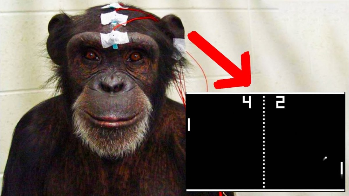 Elon Musk 's research team is teaching monkeys to play video games with their brains
