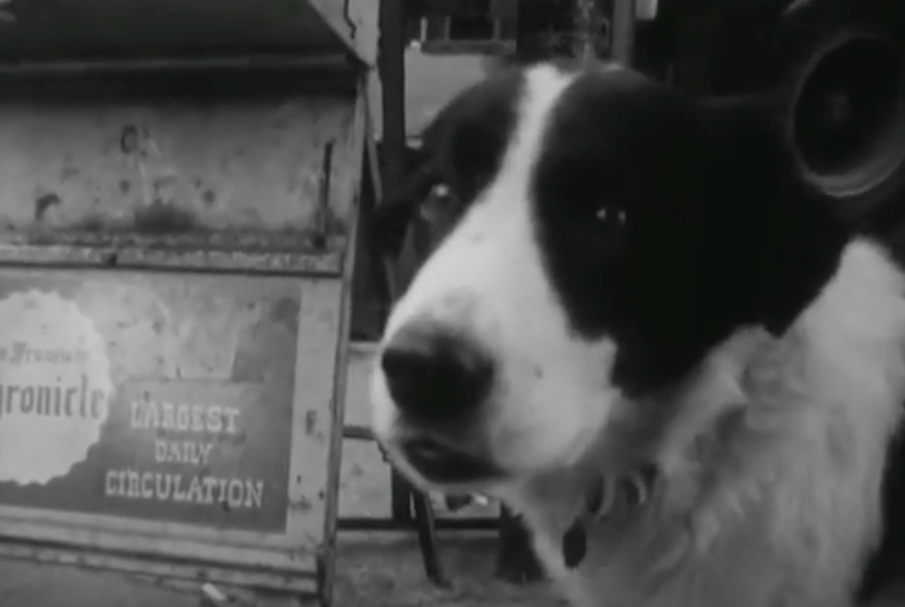 Beat poet Lawrence Ferlinghetti (RIP) reads a poem about his dog