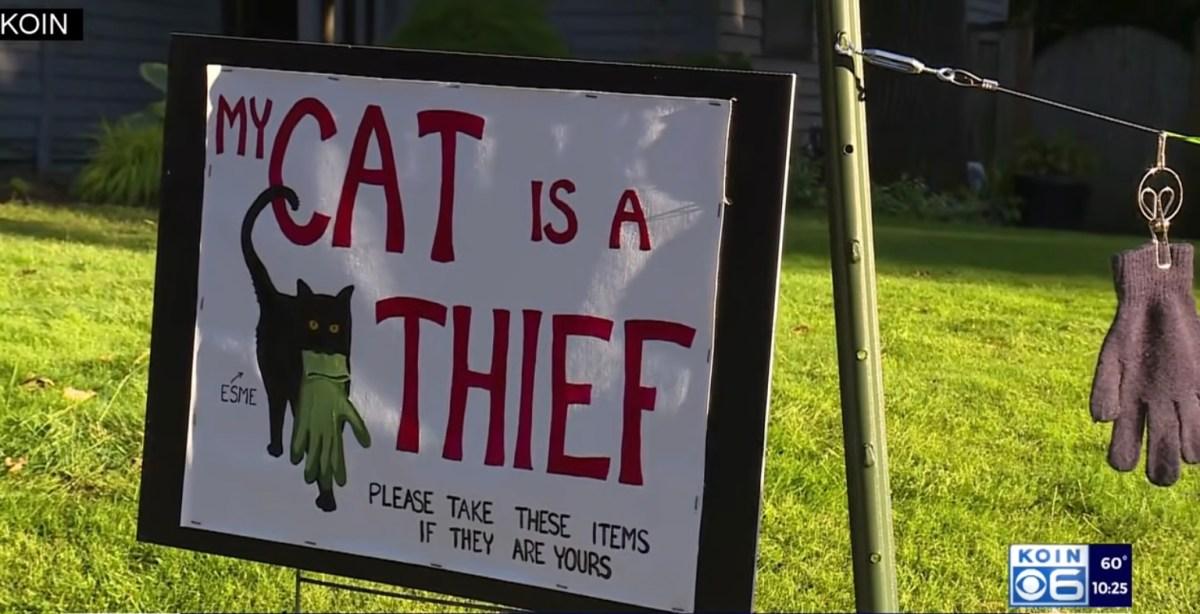 Thieving cat shamed | Boing Boing