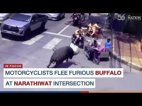 Buffalo attempts to rid Thailand of motorcycles   Boing Boing