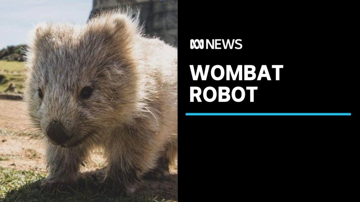 Watch a wombat-sized research robot burrow into marsupial holes | Boing Boing