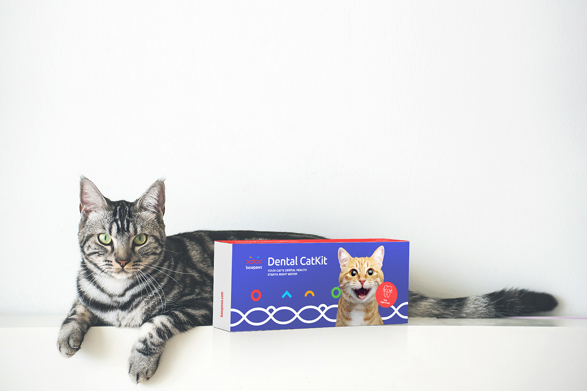 Get a complete picture of your cat's oral health with a $68 Basepaws test | Boing Boing