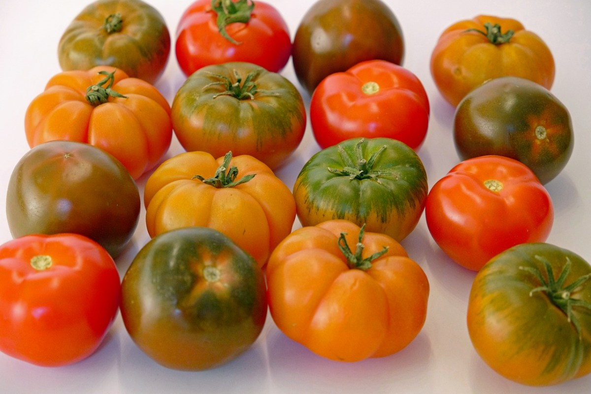 The sweetest tomatoes are underripe | Boing Boing