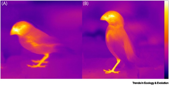 Image of bird-beak thermoregulation