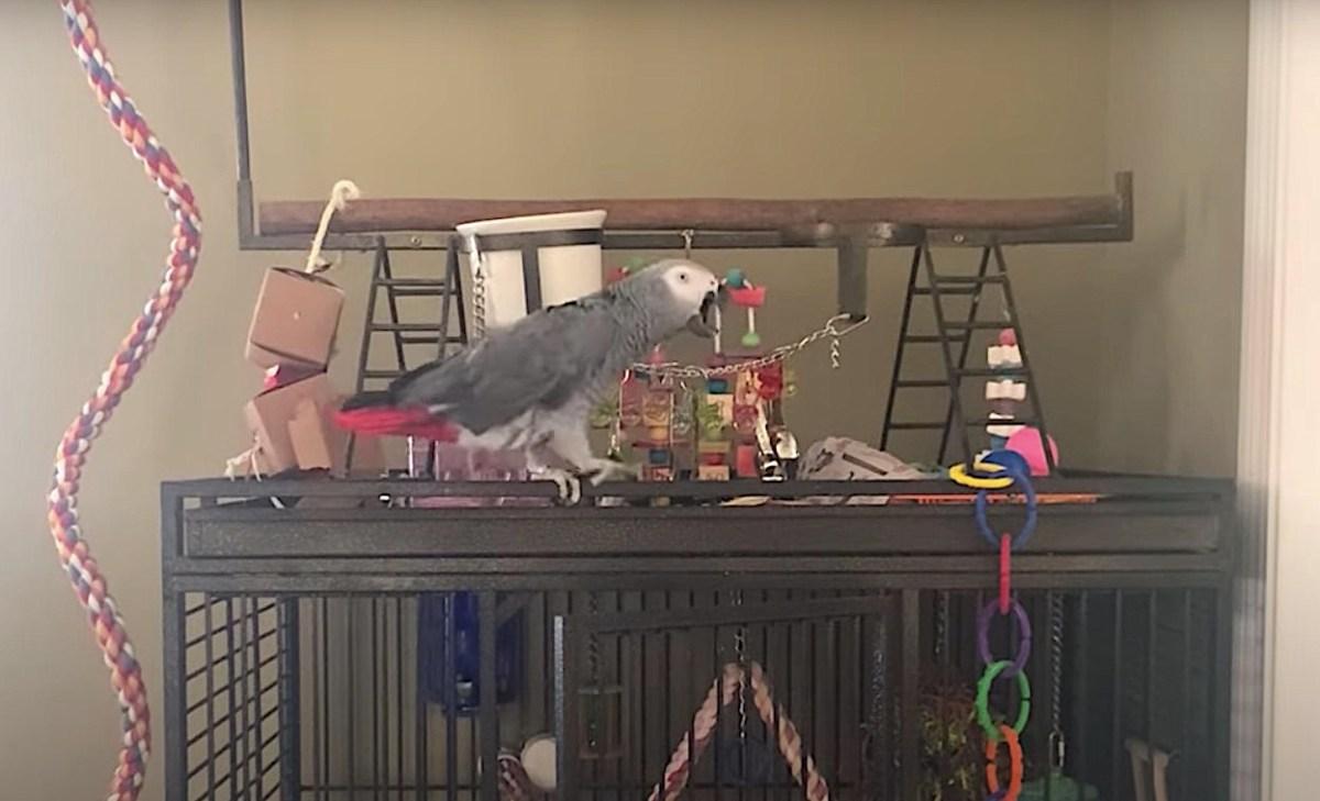 A cursing parrot hurls vulgar insults at its cat buddy | Boing Boing