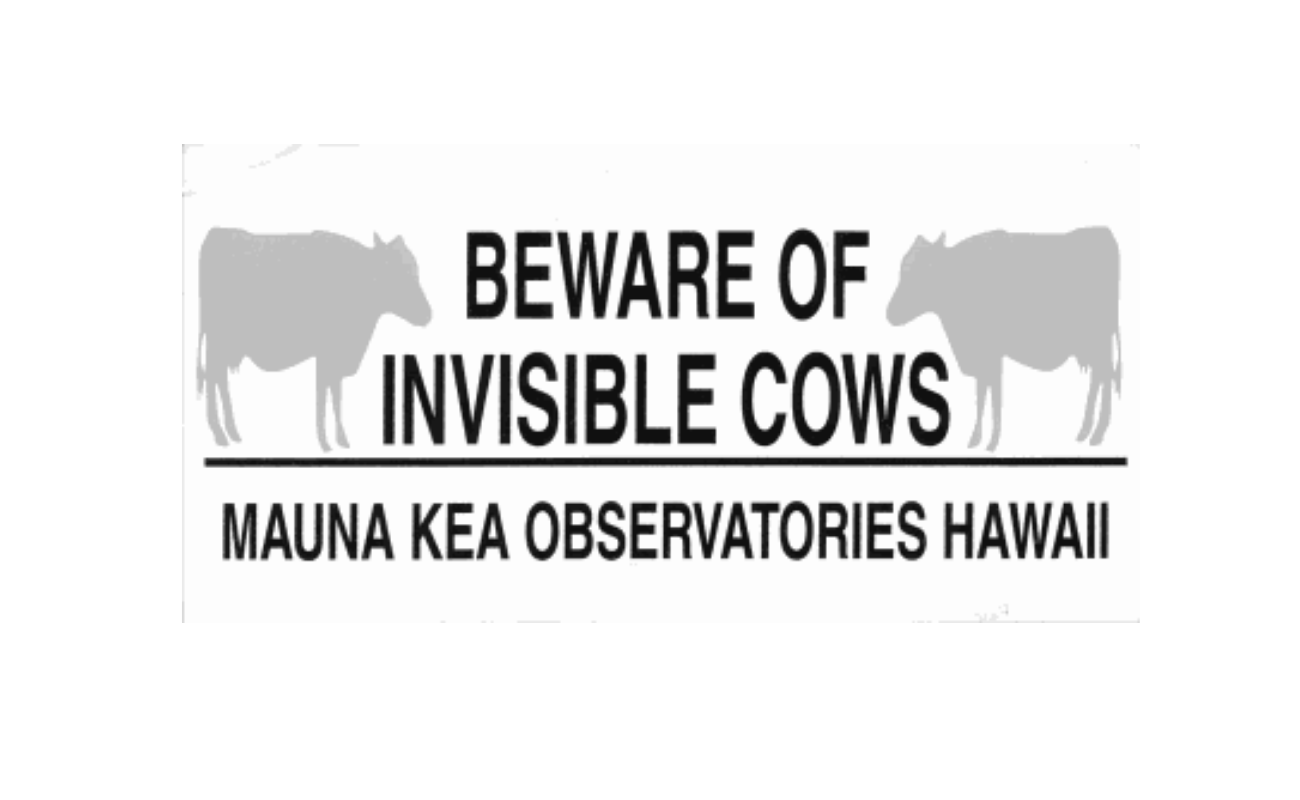 """The story of Hawaii's """"invisible"""" cows"""