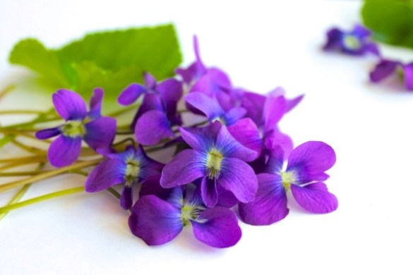Violet  Ionones   Sweet and Powdery Fragrance Notes The discovery of the ionones led to the substitution of the violet toned  synthetics for the extremely expensive violet flower oil
