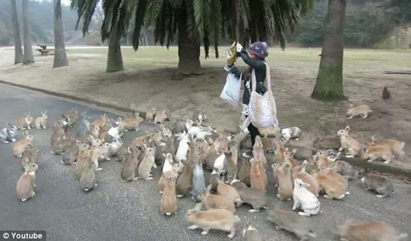 NYC Escorts are feeding bunnies.