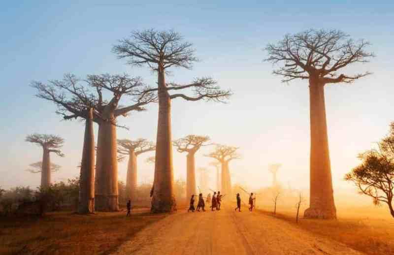 Madagaskar | Bokasin – Spennende temabøker