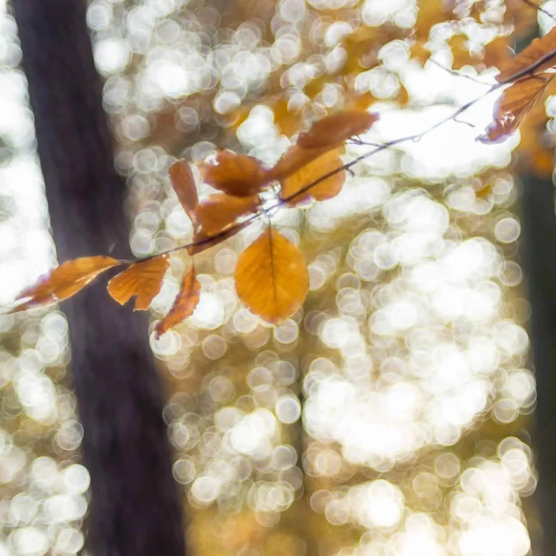 fujifilm 55mm f2.2 jesien 2017 bubble bokeh photos 10 - Zasady kompozycji - przewodnik po 20 regułach