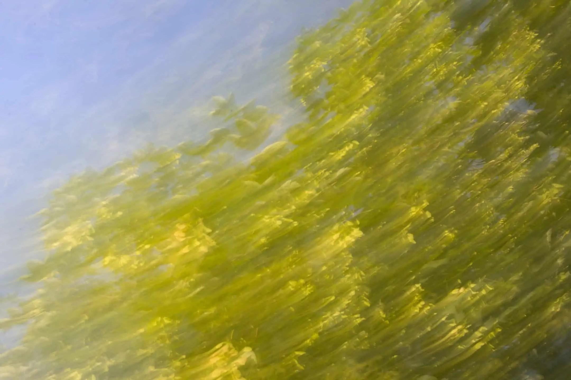 Abstrakcja w krajobrazie świadome poruszenie zdjęcia 3 - Zasady kompozycji - przewodnik po 20 regułach