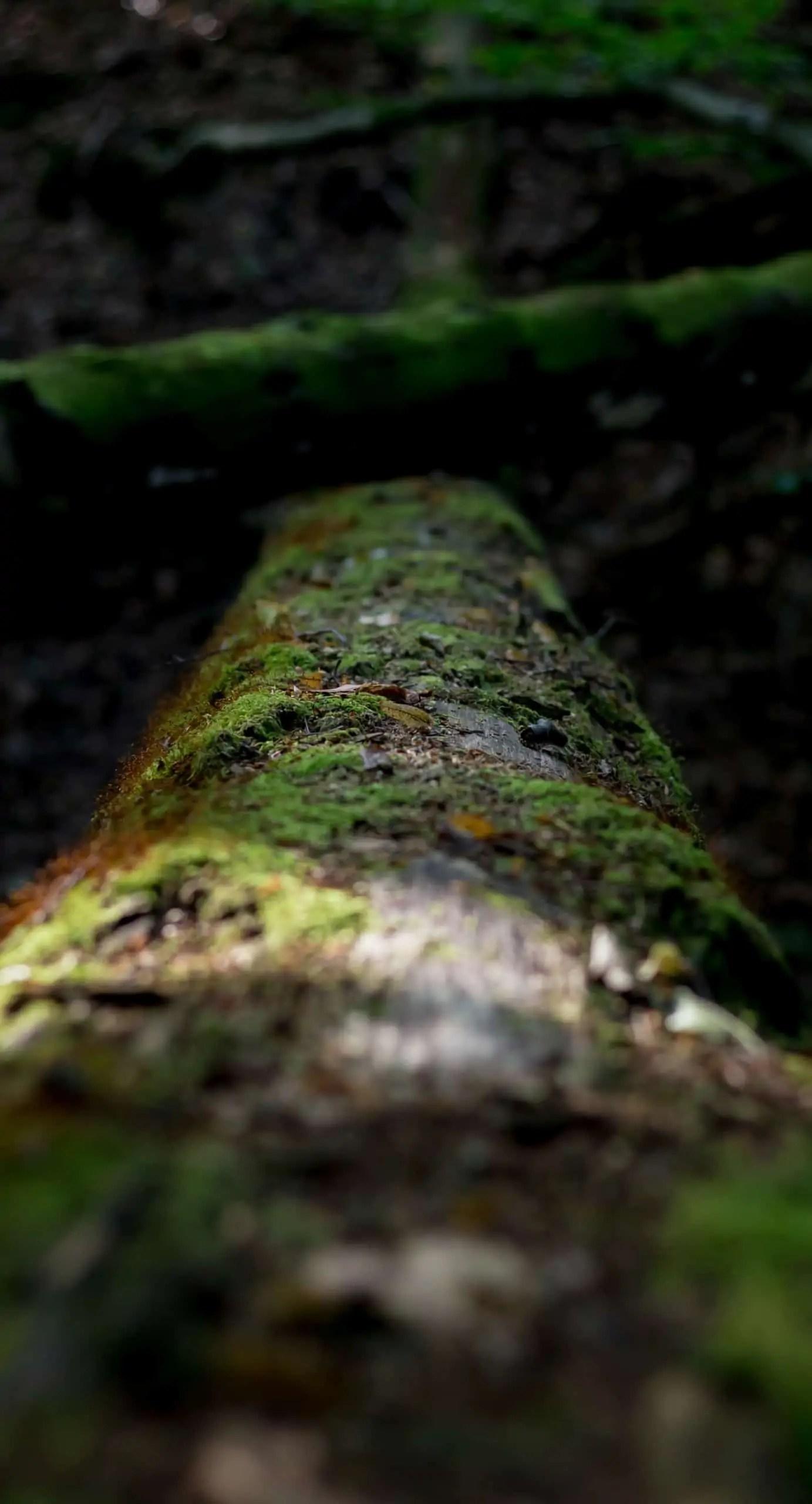 Jak znale%C5%BA%C4%87 kadr w lesie 10 - Makrofotografia poradnik i 7 pomysłów