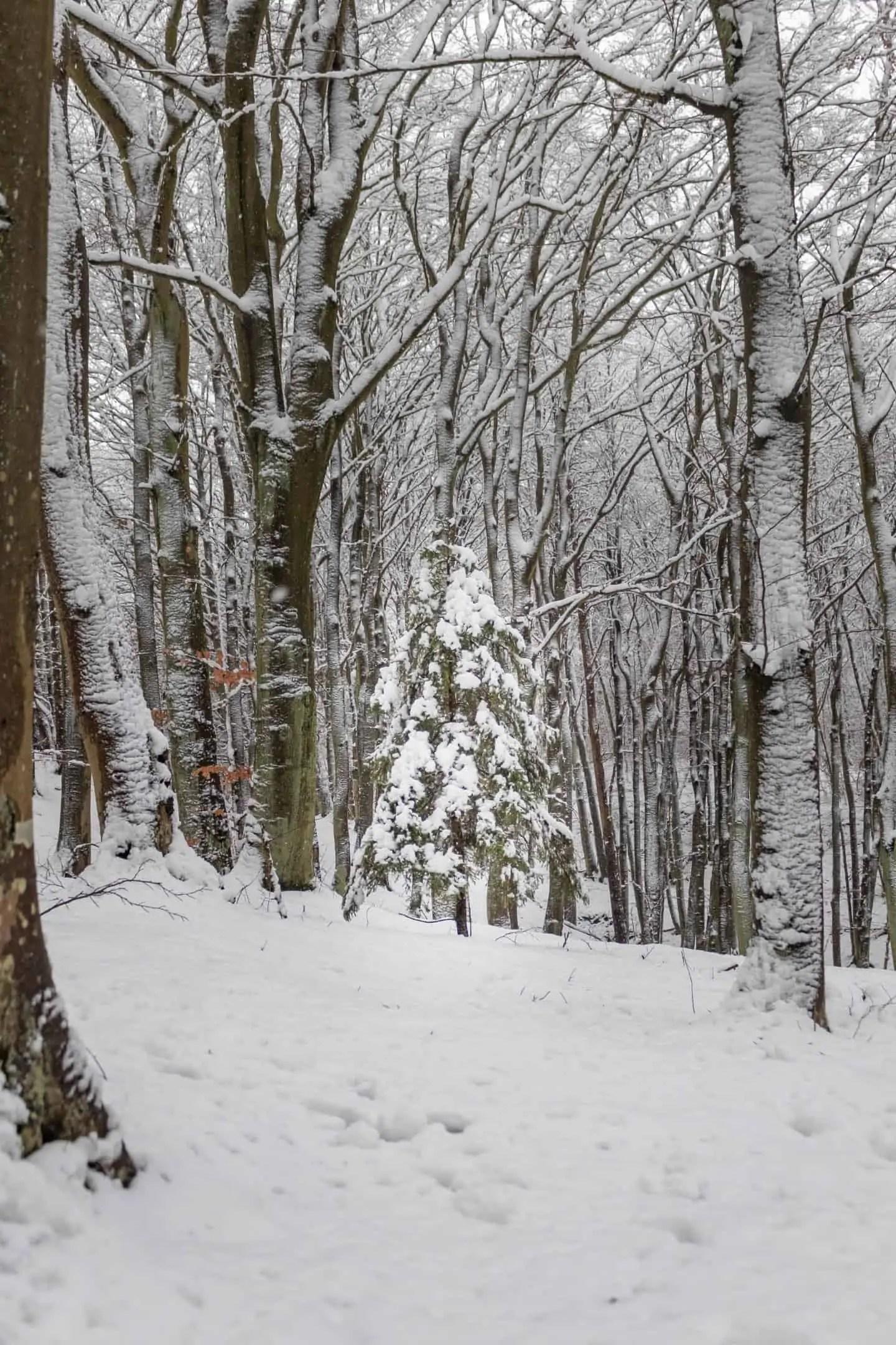 Zimowy krajobraz w Gdansku Kielpinek Park Krajobrazowy 17 - Rękawiczki fotograficzne pgytech - 5 ważnych zalet