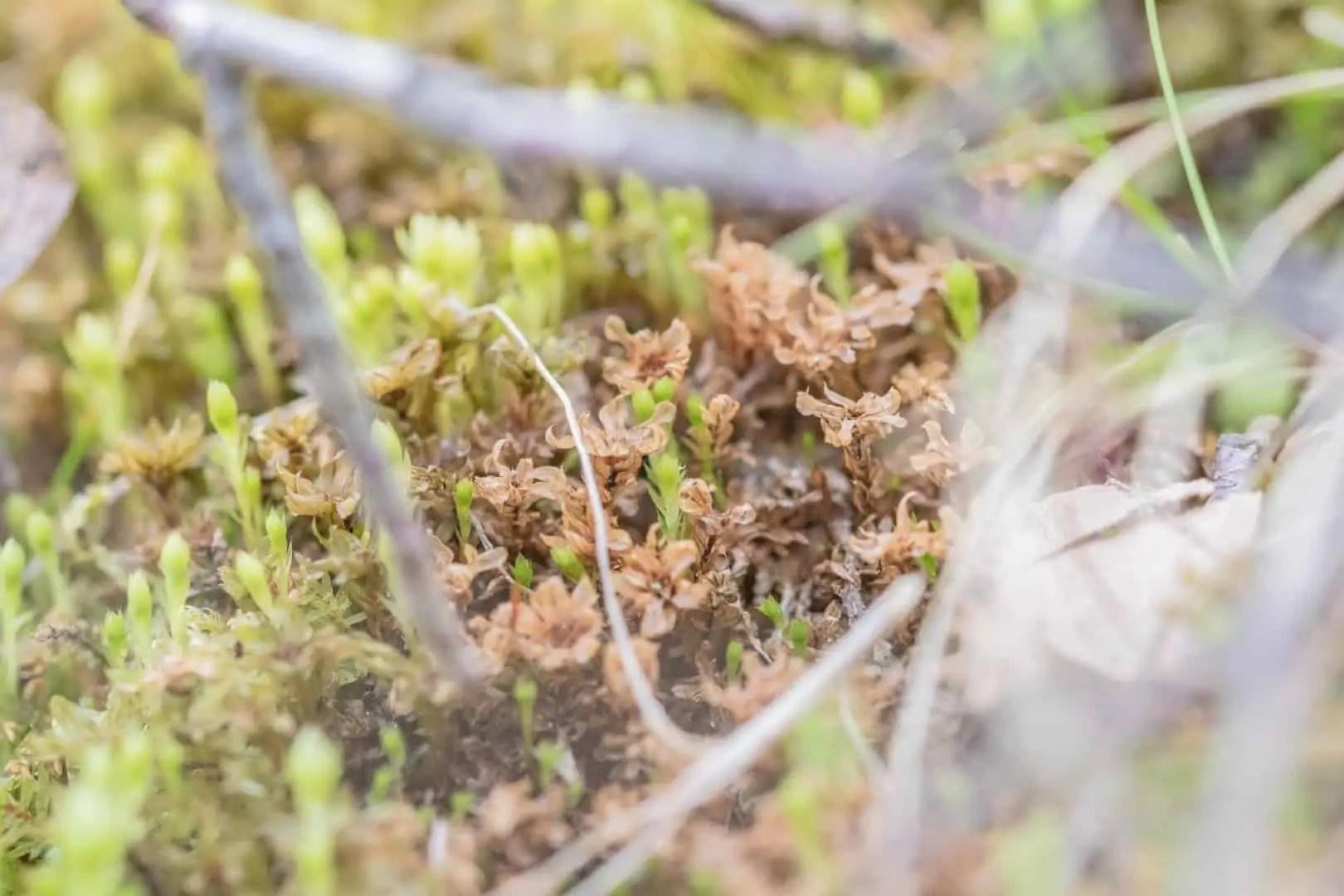Makrofotografia przyrodnicza w lesie obiektyw Tamron 90mm macro 28 - Makrofotografia poradnik i 7 pomysłów