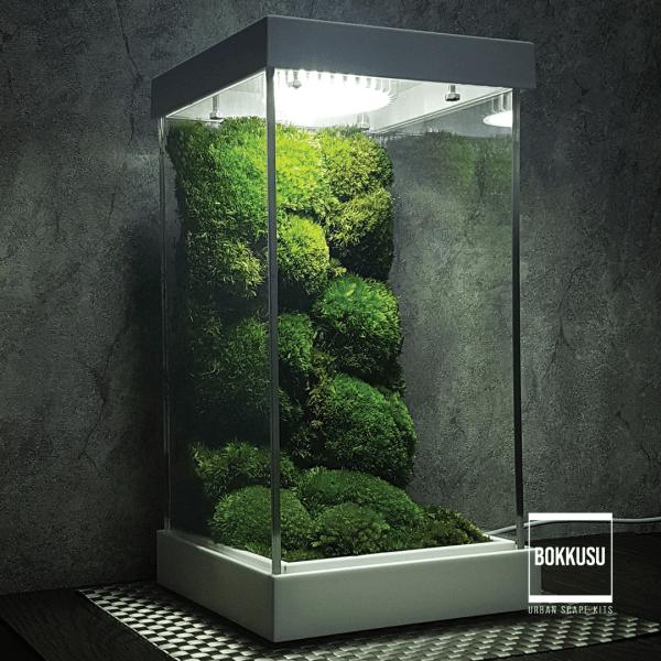 Mossarium Scape 01
