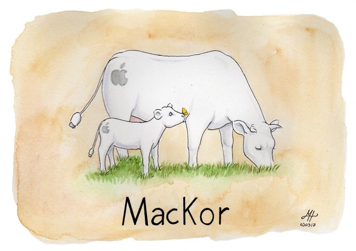 mackor ordvits