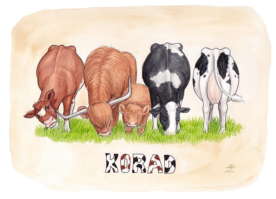 korad illustration ordvits