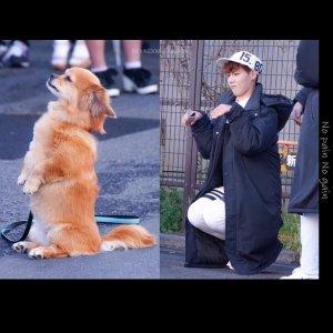 エルミンと犬