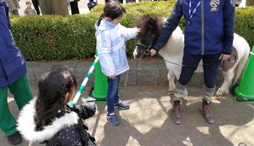 【新潟市北区】そこらの公園を凌駕する遊具の数々! 新潟競馬場は子供のための楽園だった!