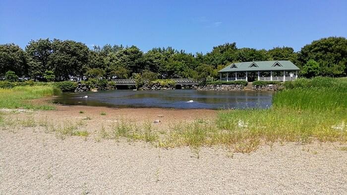 新潟県スポーツ公園 修景池 水遊び