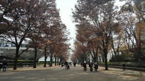 yoyogi-park-22