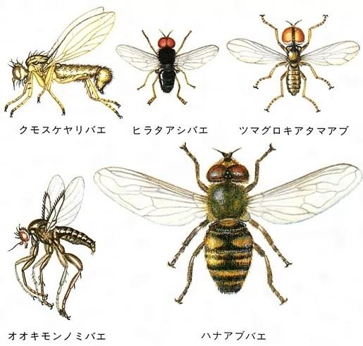 ハエの種類