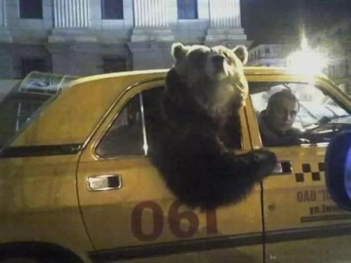熊とタクシー