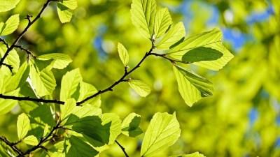 Wat vindt u? Doe mee met de enquête over bomen in Laren