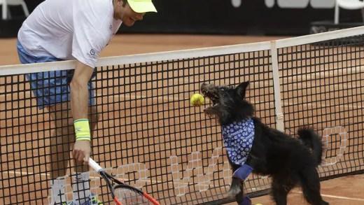 Antes do encontro de João Sousa, foram os cães que entraram em ação