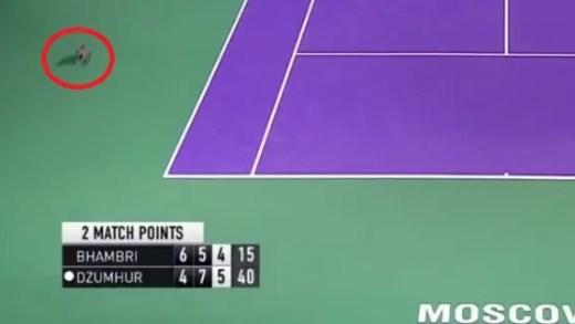 [VÍDEO] Gato interrompe encontro em Moscovo… no match-point!