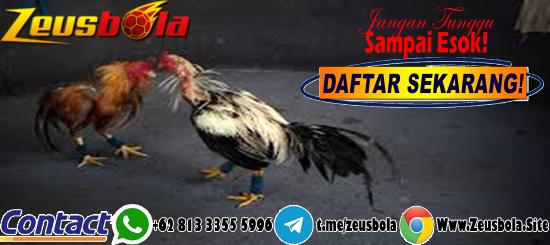 Judi Sabung Ayam S128 Bank CIMB Niaga