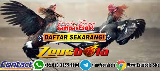Judi Sabung Ayam S128 Via BANK Mandiri
