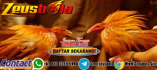 Sabung Ayam S128 Deposit Bank Jenius