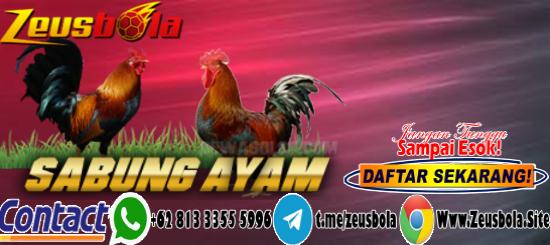 Situs Sabung Ayam S128 Resmi