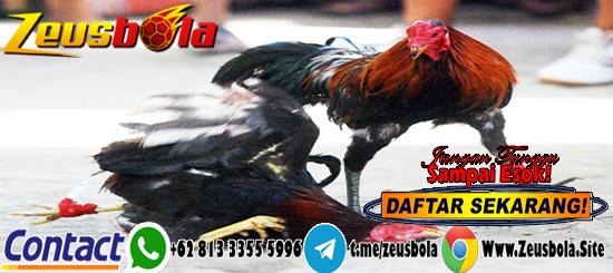 Taruhan Sabung Ayam S128 Deposit GoPay