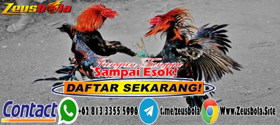 Taruhan Sabung Ayam S128 Online