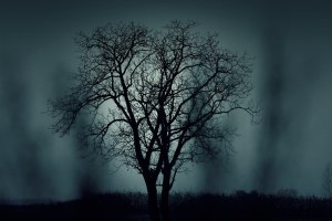 solitary bare tree with foggy background