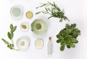 Image contains several small plants and bowls of natural ingredients for skin care.