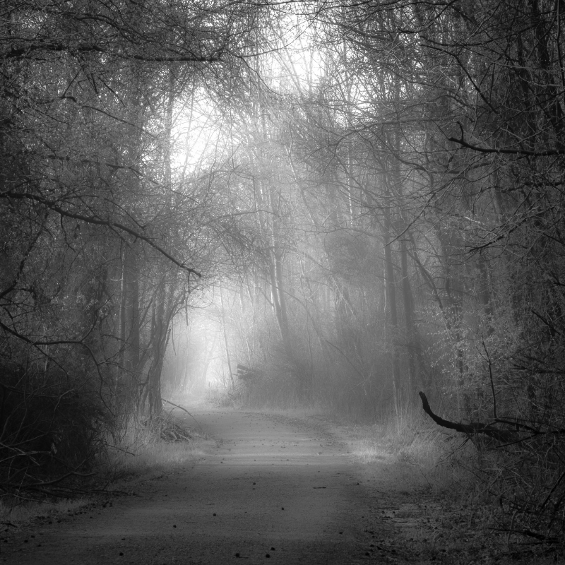 My path image is a black & white photo of a densely foggy woods.