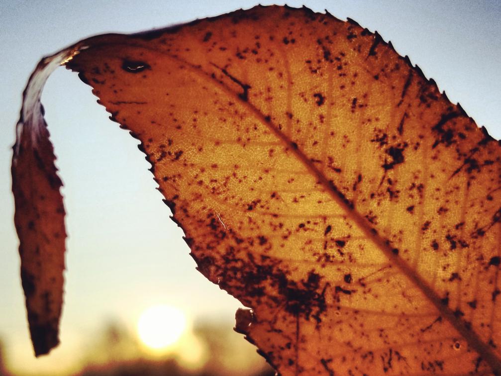 Resized color leaf closeup 1