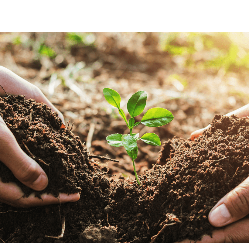 Two sets of hands planting a small tree