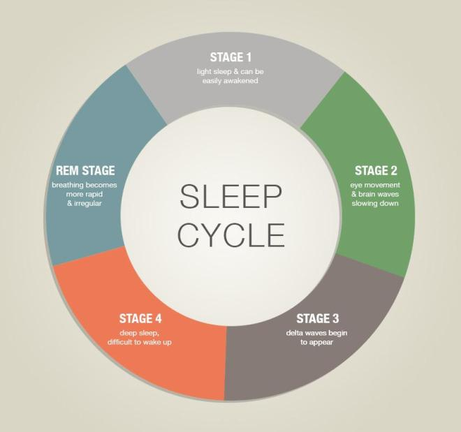 sleep cycle