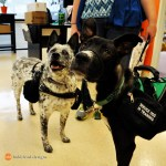 Bradley and Blizzard at BLD 0061 - Service Dogs in Action