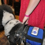 DSC 0116 - Service Dogs in Action