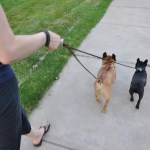 Traditional Lead - premium leather dog leash