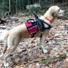 SUDAK 0490 - Balance Assistance Harness™ for service dogs