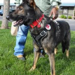 Track Agi harenss for Service Dog 2759 - Service Dogs in Action