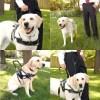service dog lead 4 - BLD's Guide Dog Lead